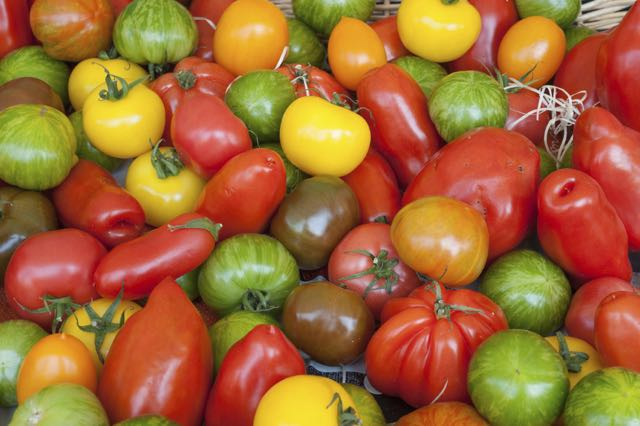 medium tomatoes of all colors